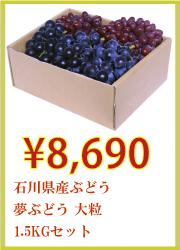 石川県産ぶどう 夢ぶどう 大粒 1.5kgセット