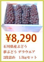 石川県産ぶどう 夢ぶどう デラウエア 2段詰め 1.5kgセット